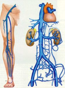 Sistema Venoso Profundo-Anatomia SVP
